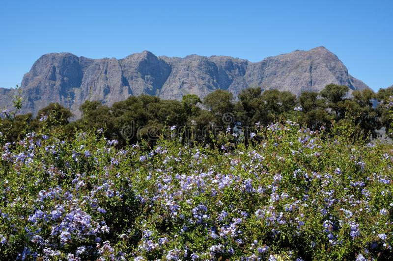 View of the mountains from Tokara Wine Estate, Cape Town, South Africa, taken on a clear day. stock images