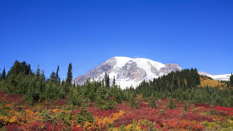 Mt Rainier Fall Colors Cloudless Blue Sky royalty free stock images