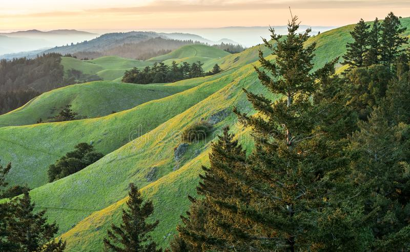 Rolling green hills and pine trees at sunset. View from Mt. Tamalpais at sunset. Saturated green grass hills with pine trees and fog in the background royalty free stock photography