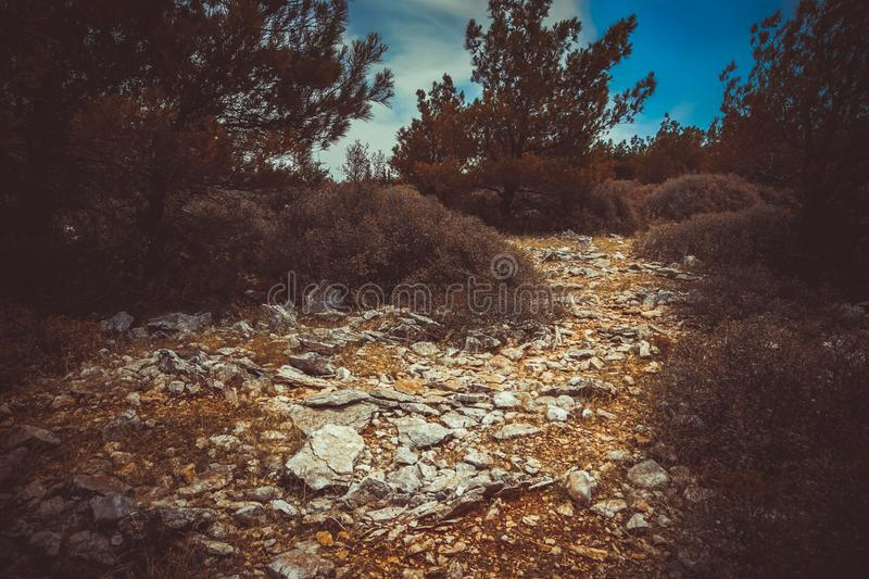 View of mystical forest and stony path. Majestic area from Izmir, Turkey royalty free stock photo