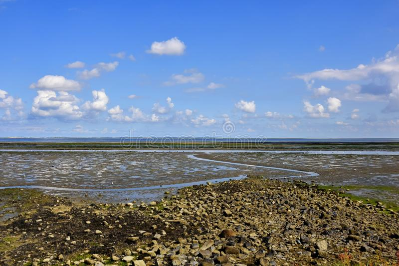 Mud Flats. View NE from the West Frisian island of Texel showing many birds feeding on the mud flats at low tide of the Wadden Sea, UNESCO World Heritage Site royalty free stock photos