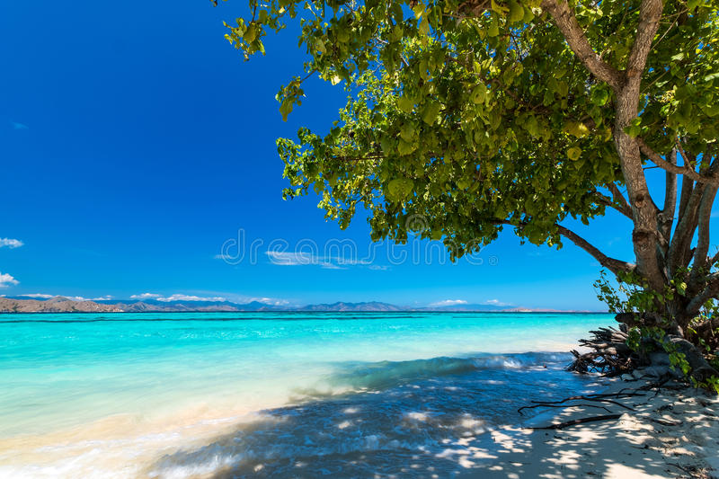View of nice tropical beach. royalty free stock image