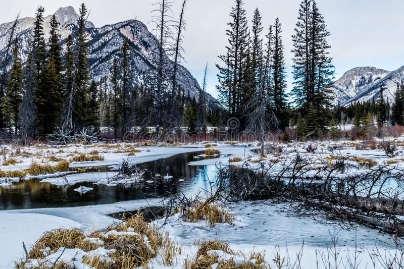 Mount Lorrett Ponds, Bow Valley Wilderness Area Area, Alberta, Canada. A view o the open water from the marsh area of the ponds in winter stock photos