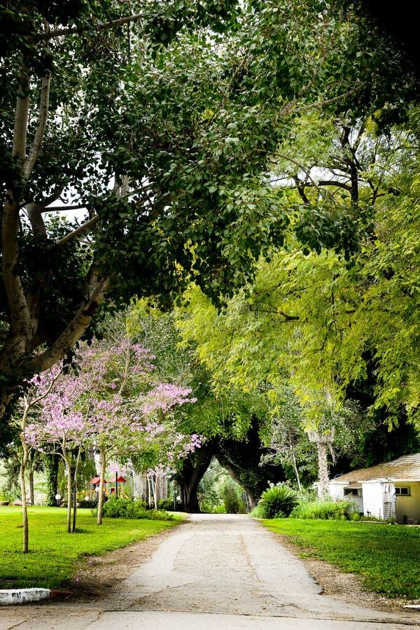 Free View Of Kibbutz Kfar Glikson, Israel Stock Photos - 68526853