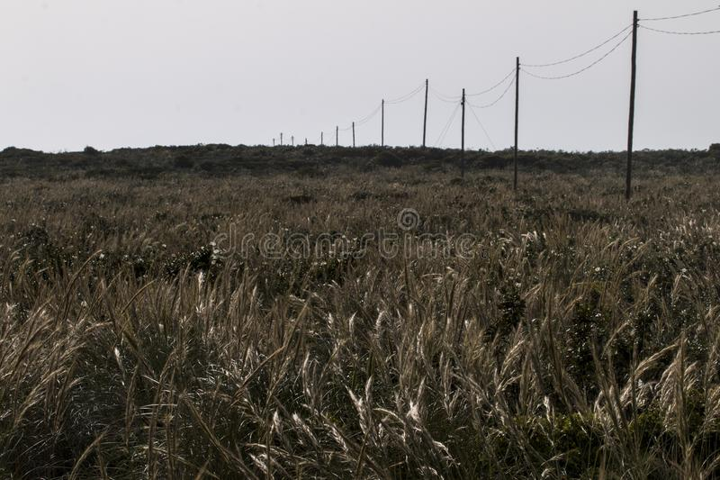 Electricity wire on a field. View of an old network of electricity wire on a field stock photos