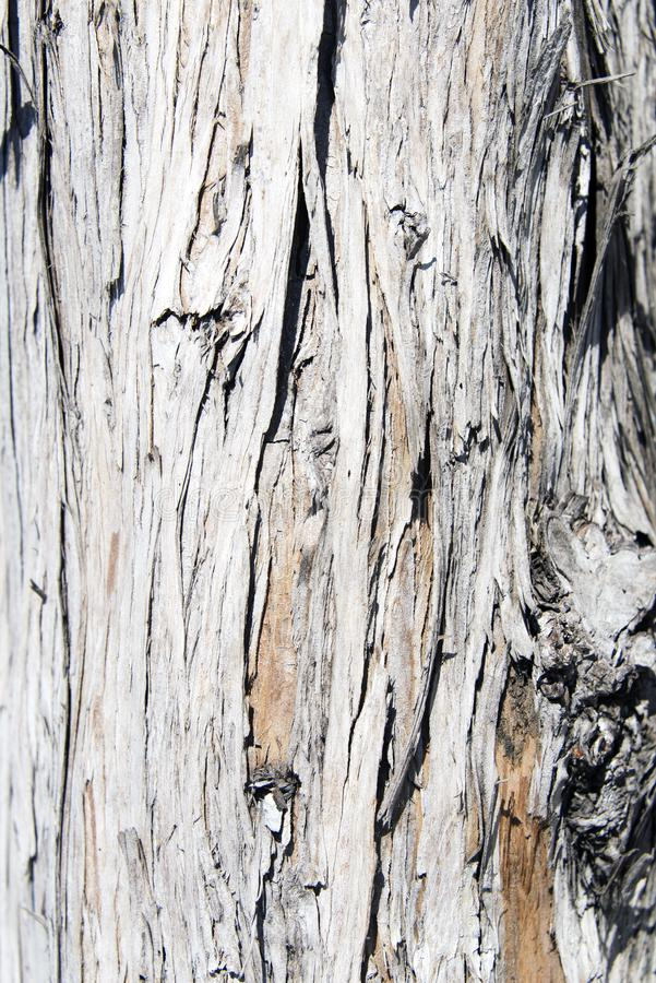 A view of an old tree for backgrounds, textures or any other graphic purposes.  stock photography