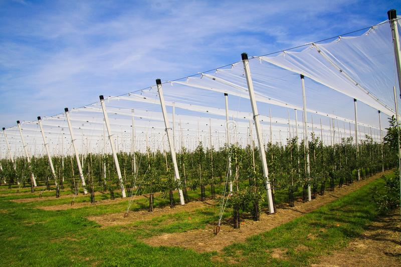 View on open greenhouse for growth of young apple trees on fruit plantation against blue sky in summer stock image