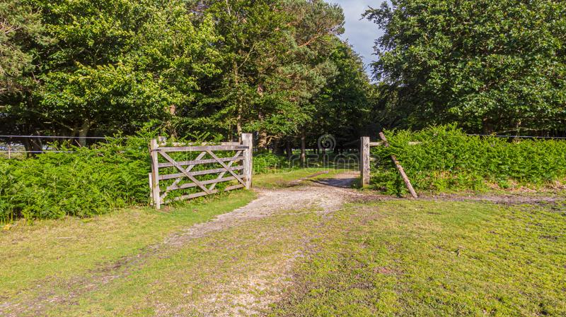 A view of a open wooden gate with a green grass and stony path leading to a forest under a majestic blue sky royalty free stock image