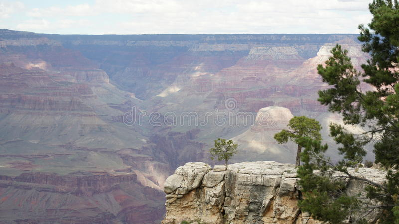 View of the opposing face of the Grand Canyon. View of the opposing face of the Grand Canyon, with cloudy skies in background and scrub pines in the foreground stock images