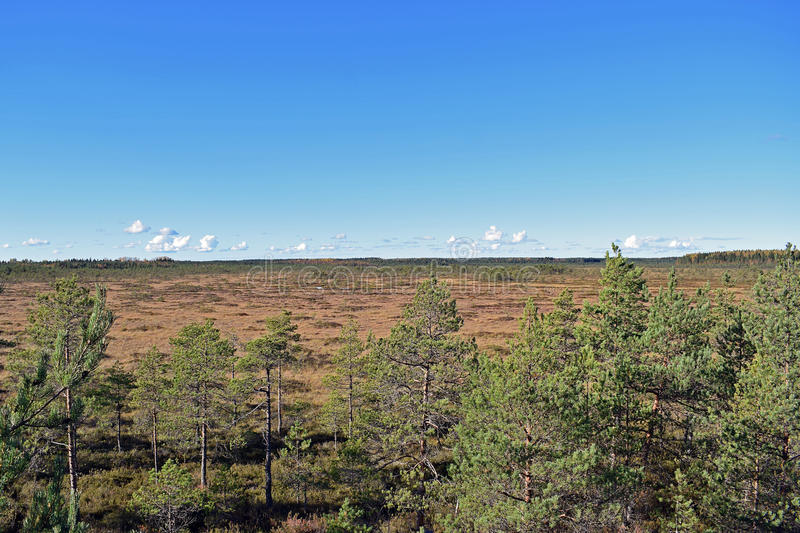 View over the bog stock photography
