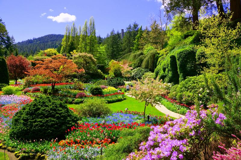 View over colorful flowers of a garden at springtime, Victoria, Canada. Butchart Gardens, Victoria, Canada. View of the colorful flowers of the sunken garden royalty free stock photo