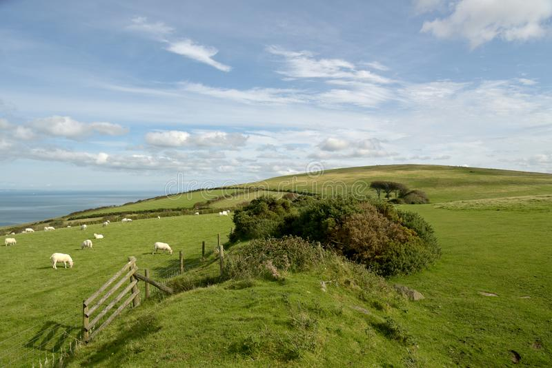 View over Countisbury, Exmoor, North Devon. View over fields and hedges on Countisbury above Bristol Channel, Exmoor, North Devon royalty free stock image