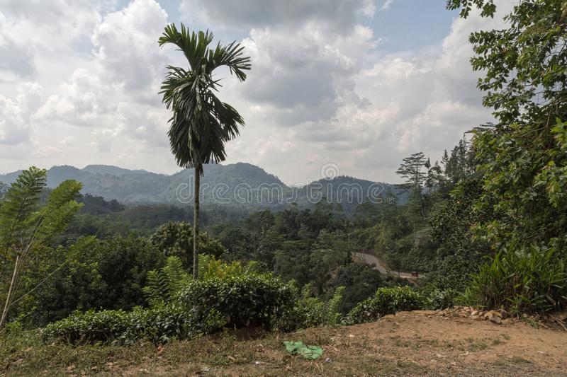A view over an forest in Sri Lanka stock images