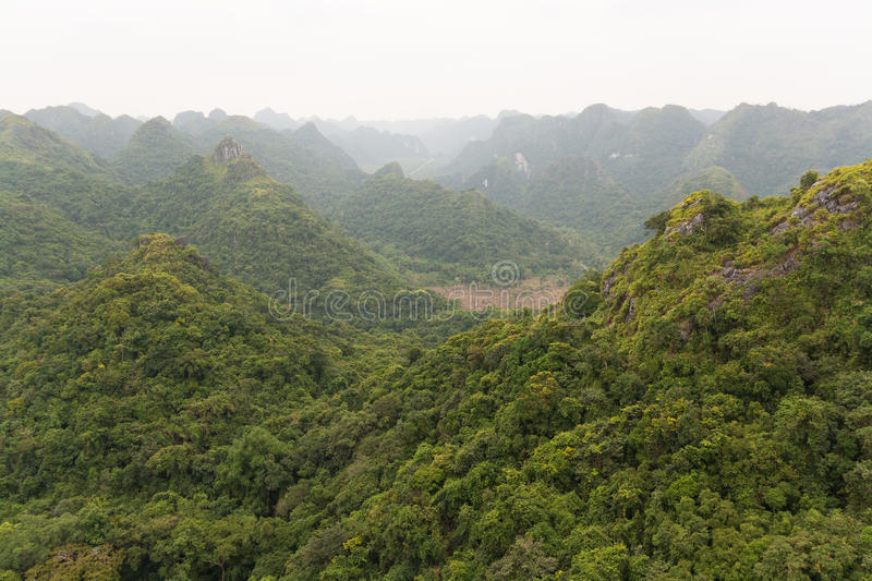 View over green forest