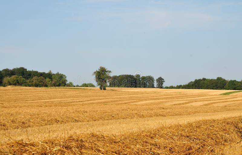 Summer landscape in swabian alb with harvested field. View over harvested field to trees in background in summer landscape in swabian alb in germany royalty free stock images