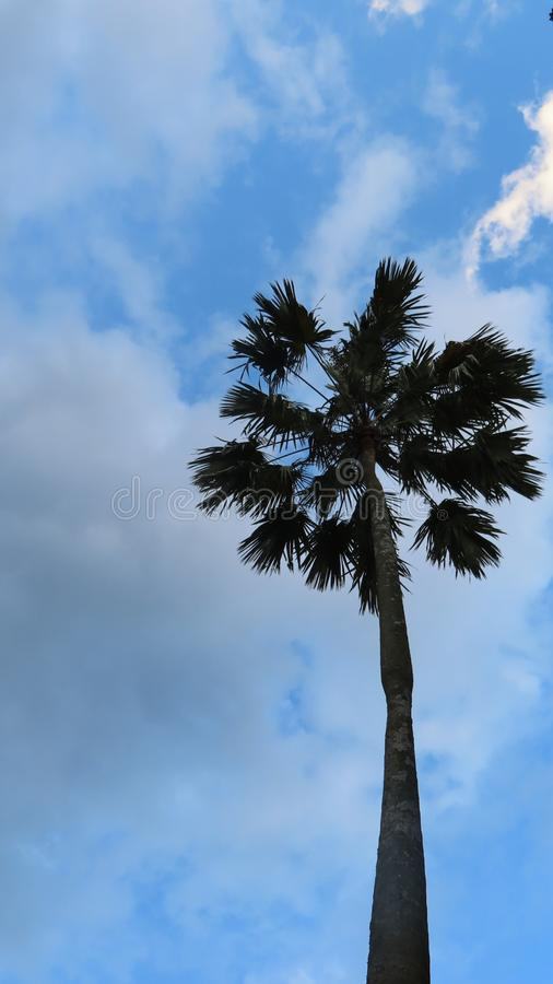 View of a palm tree at Botanical Garden, nature and skies background stock photography