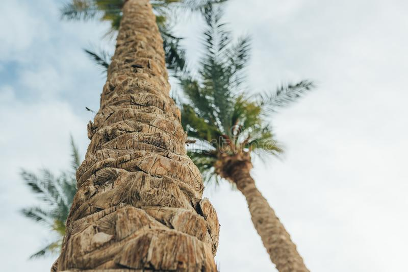 View of palm trees background, stem bark and leaves royalty free stock images