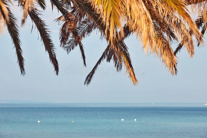 View of the palm trees, blue sky and the sea on a tropical island stock photo