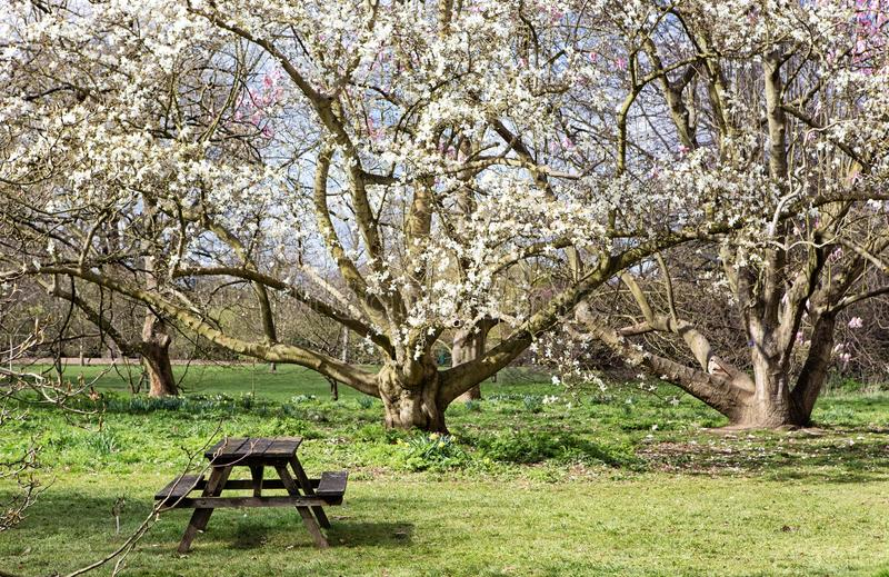 Download View From Park In The Spring Stock Image - Image of tree, scene: 39506169