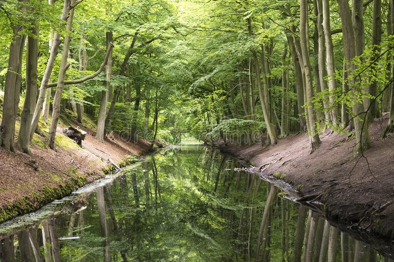 View on the parkand of landgoed Clingendael in Wassenaar near the Hague in the Netherlands stock photo