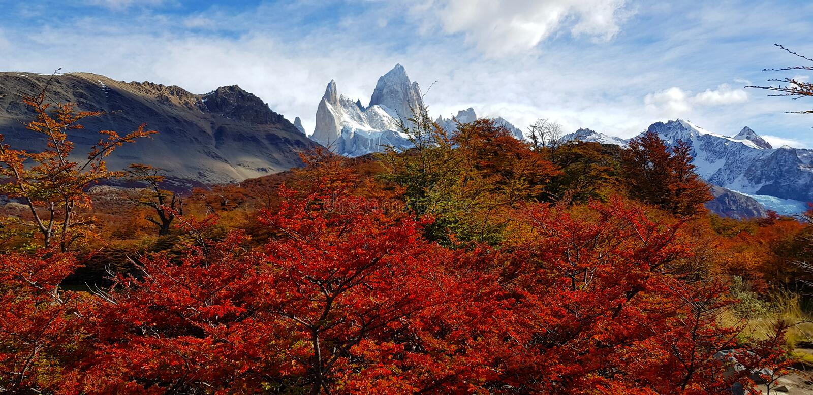 Trees with autumn colors and Mount Fitz Roy, Patagonia, Argentina stock photography