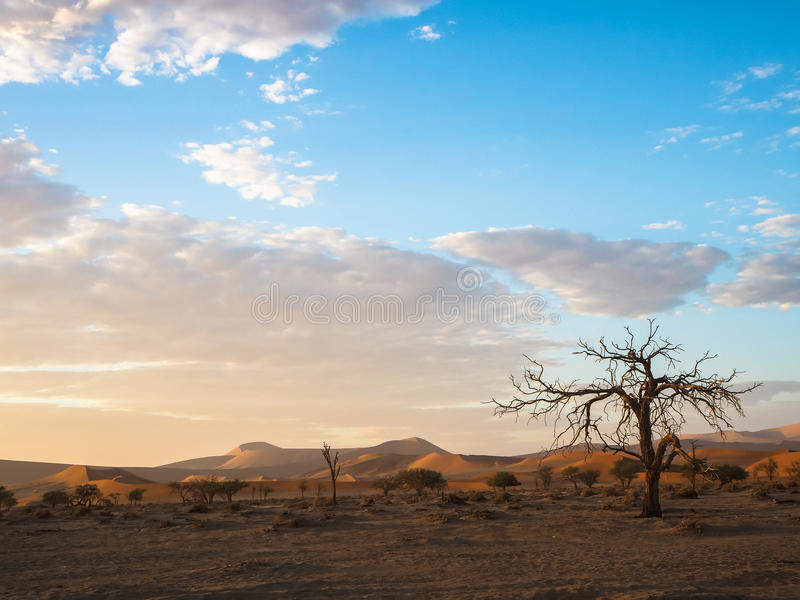 View of peaceful morning sunrise with beautiful dead tree and desert sand dune vast horizon with soft blue sky and white cloud stock photos