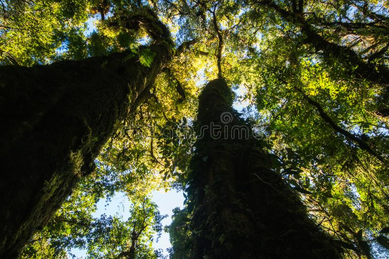 View photos from under the big tree.Show detail a green leaves f stock image