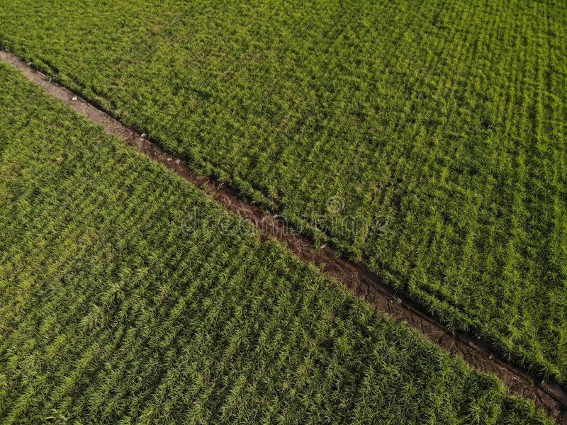 Aerial view of the planting of dron stock photo