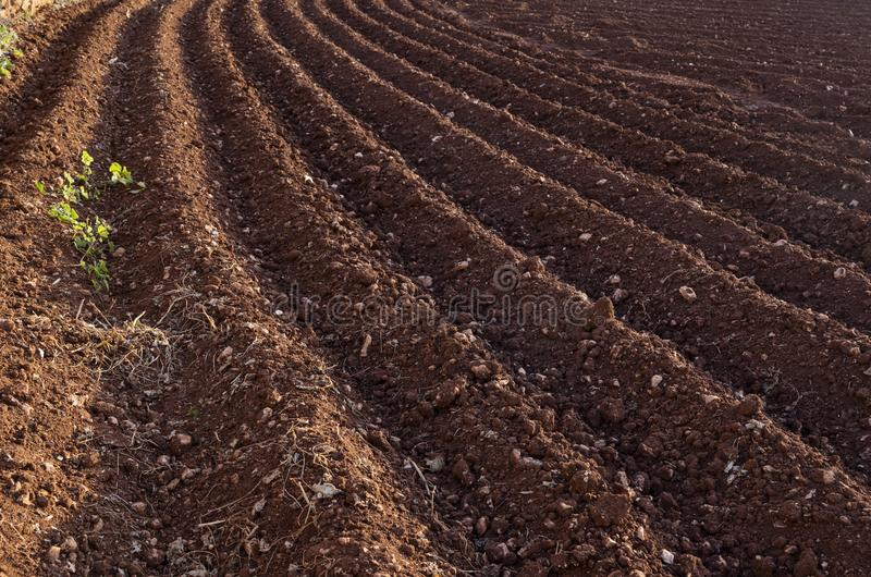 View of the plowed land. Furrows from the plow. Agriculture stock photography