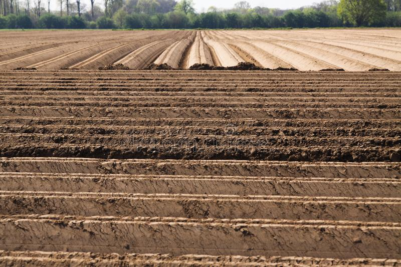 View on plowed tilled cropland with symmetrical vertical and horizontal furrows in Netherlands near Roermond royalty free stock photo