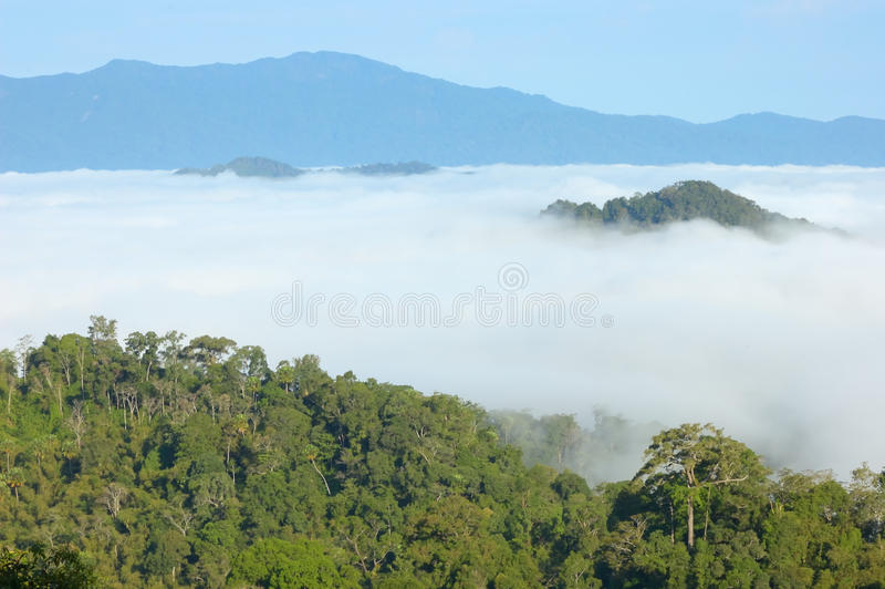 Download View Point Wetlands Sea Fog. Stock Image - Image: 26633561