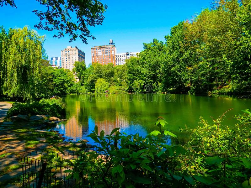 View Of A Pond On A Beautiful Day In Central Park NYC. Scenic view of the beautiful green nature surrounding a pond with the skyscraper buildings overlooking stock image