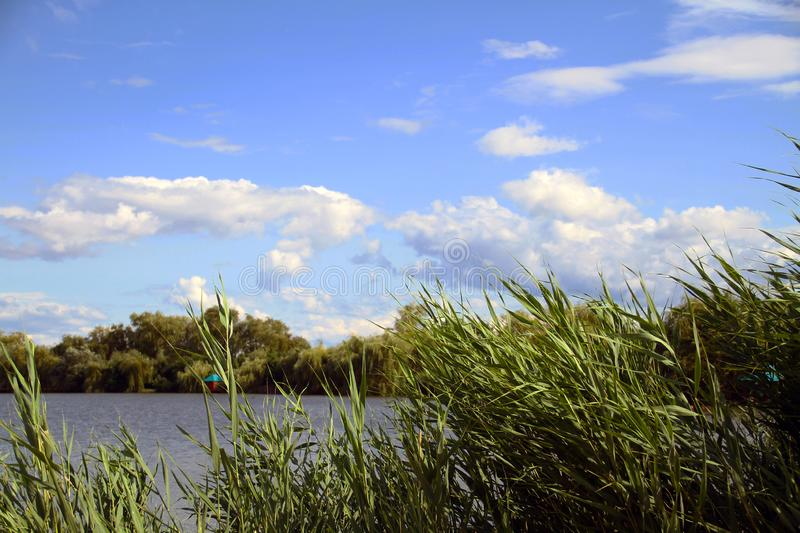 View of the pond with pergolas through the reeds royalty free stock images