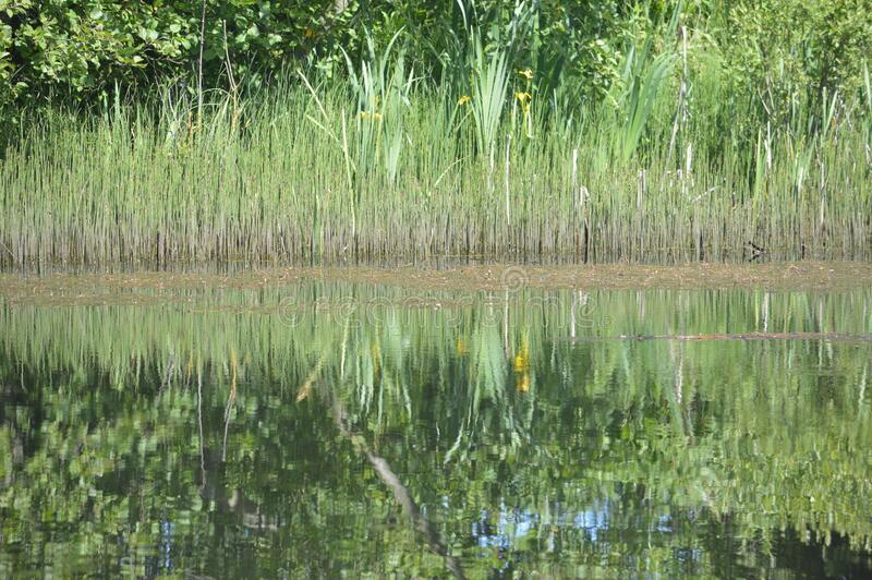 View of a pond with reflections stock photo