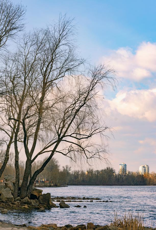 View of poplars close to the River in Kiev at the beginning of spring .Buildings in the background. View of  poplars close to the blue Dnieper River in Kiev at royalty free stock photography