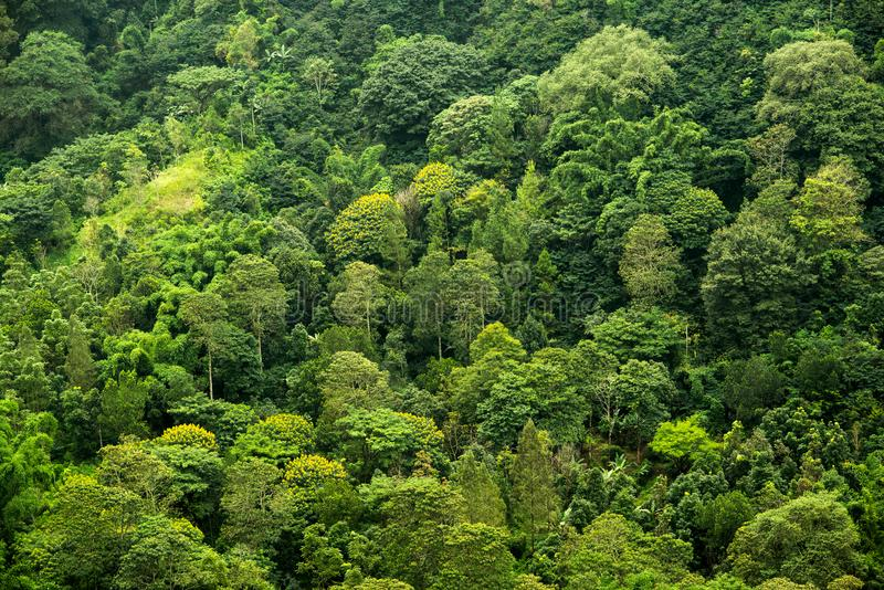 Tropical forest from above royalty free stock photo