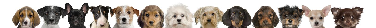 View of puppy heads stock images