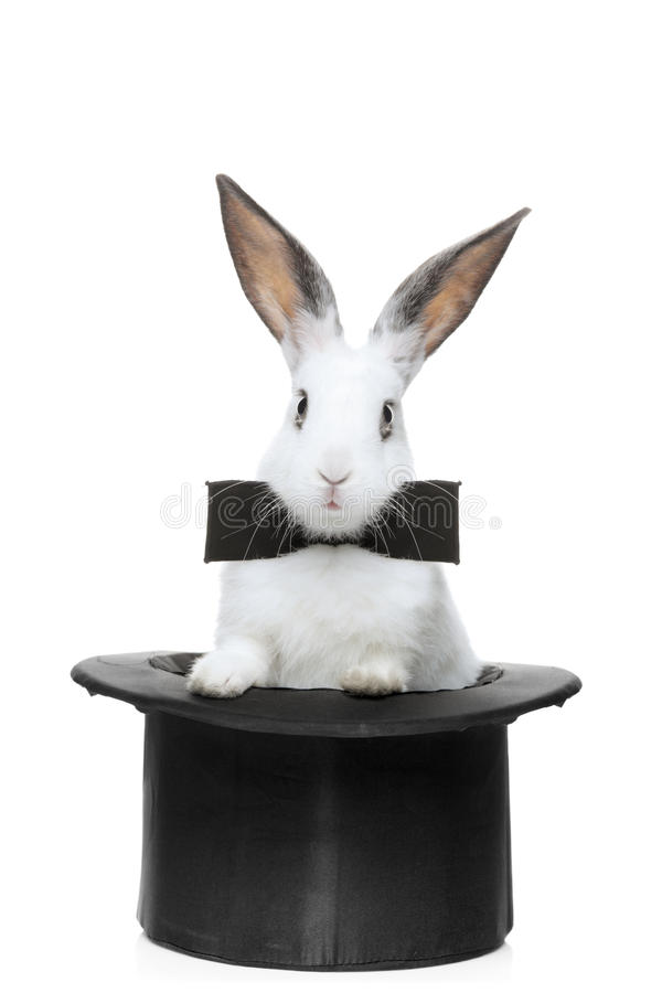 A view of a rabbit with bow tie in a hat. Isolated on white background royalty free stock photos
