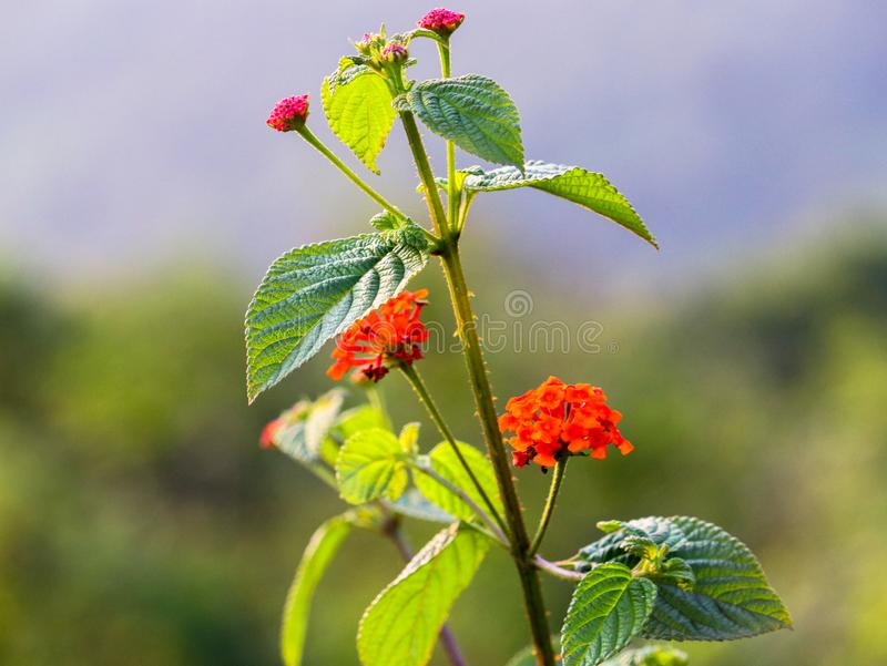 A view of red flowers with blurred background in a forest royalty free stock photography