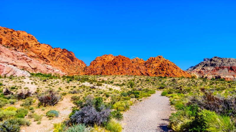 View of the Red Sandstone Mountains from the Ash Canyon Trail in Red Rock Canyon. National Conservation Area near Las Vegas, Nevada, USA royalty free stock photography