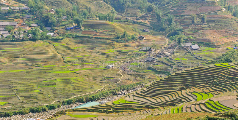 Download View Of Rice Crops In Vietnam Stock Photo - Image: 24821904