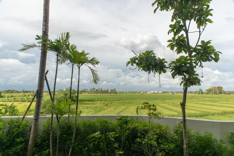 View of rice field at Bali island in Indonesia royalty free stock image