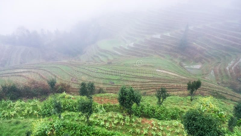 View of rice terraced hills in brume. Travel to China - view of rice terraced hills in brume from viewpoint Music from Paradise in area of Dazhai Longsheng Rice royalty free stock photo