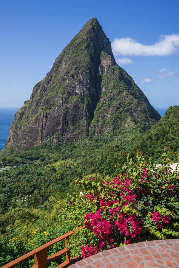 Piton and Flowers stock photography