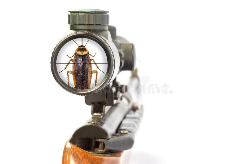 The view of a rifle with a cockroach is the goal royalty free stock image