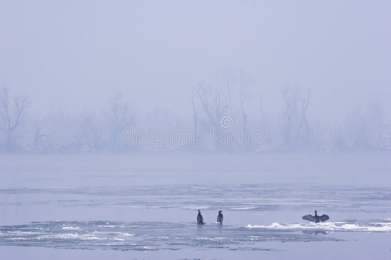 Download View Of River Danube In Mid Winter Stock Image - Image: 7298901