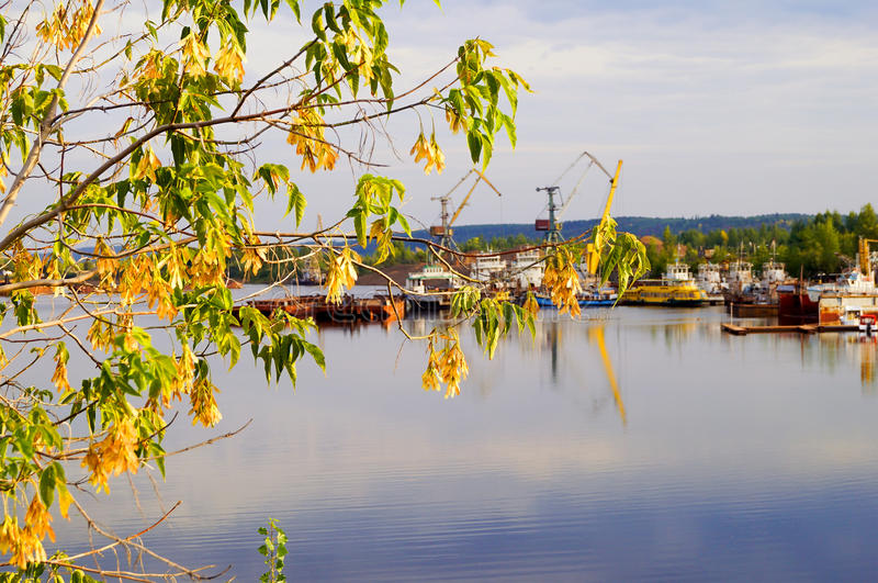 View of the river port through tree branches