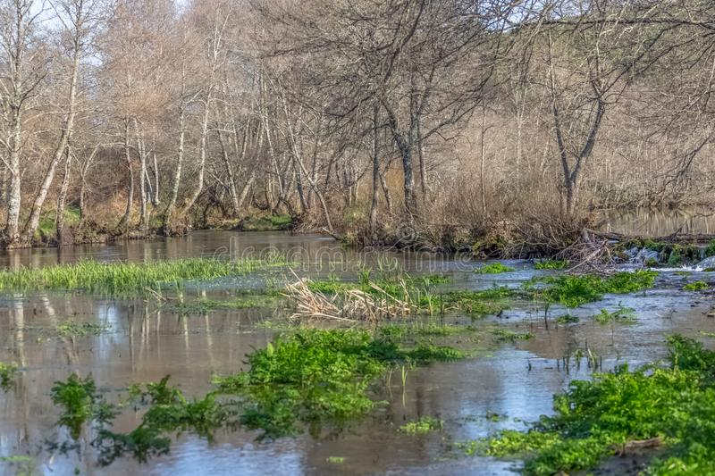 View of a river, with trees, rocks and vegetation on the banks. Reflections in the water and bright colors, Portugal, ecological, ecology, wood, wooden royalty free stock photos