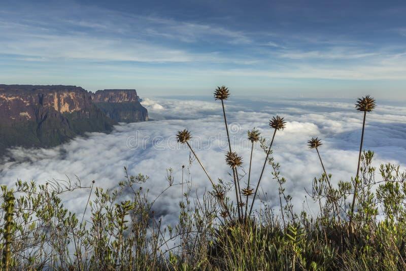 View from the Roraima tepui on Kukenan tepui at the mist - Venezuela, South America stock photos