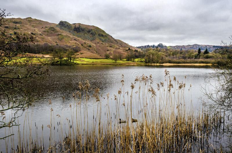 A view of Rydal water from the road with the Langdales. A view of Rydal water in the Lake District with the Langdales range in the background royalty free stock photos